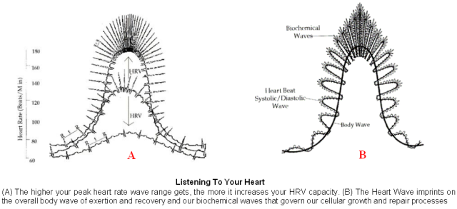 HRV Superwaves, Dr Irving Dardik